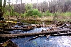 Rzeka Włodawka spływy kajakowe