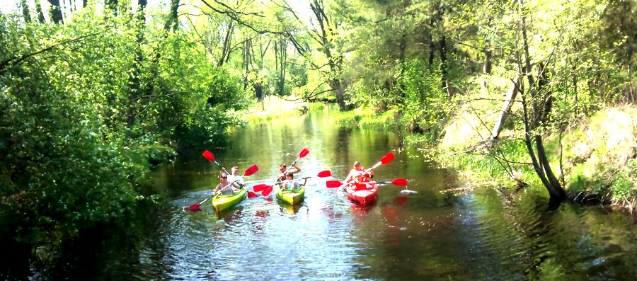 Rzeka Włodawka  Spływy kajakowe Bugiem